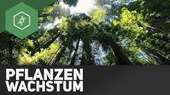 Warum wachsen Pflanzen?! ● Gehe auf SIMPLECLUB.DE/GO & werde #EinserSchüler
