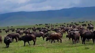Dzikie zwierzęta Afryki l Wild animals from Africa