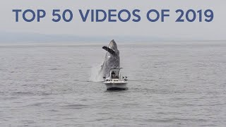 Top 50 Best Viral Videos of 2019