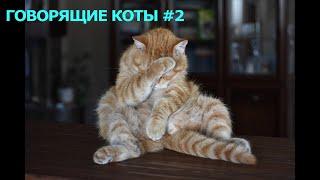 Говорящие коты 2 приколы с котами подборка смешных котов которые говорят как люди