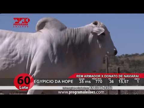 LOTE 60   HOPE 137