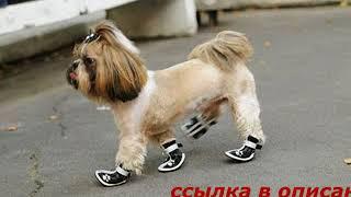 Магазины обуви для маленьких собак в спб