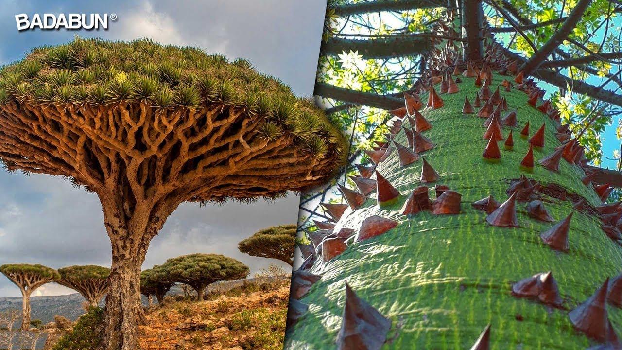 Los 10 árboles Más Extraños Y Hermosos Del Mundo Youtube