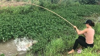 Unbelievable Girl Fishing vs. MONSTER Gourami Fish