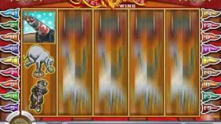 5 Reel Circus Slot at Cocoa Casino
