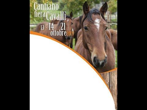 Cantiano fiera cavalli 14 ottobre 2018 1° appuntamento