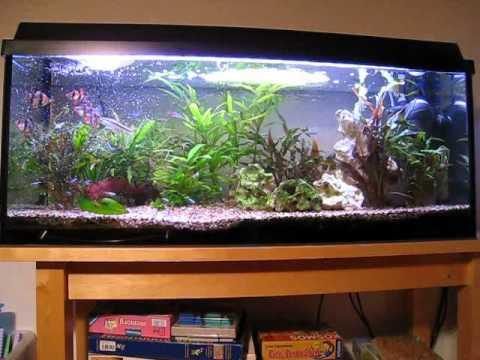 Privates aquarium 120l youtube for Aquarium 120l