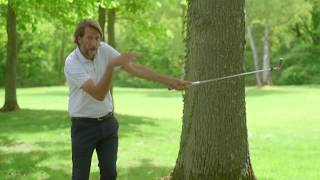 Episode 1 : Les arbres