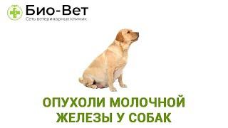 Опухоли молочной железы у собак. Ветеринарная клиника Био-Вет.