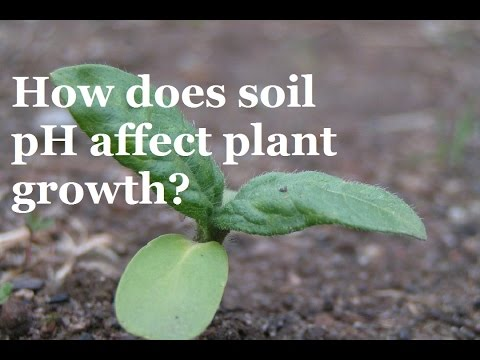 How does pH affect the Growth of Plants?