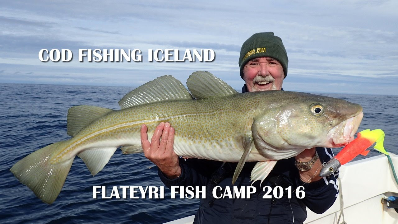 Cod fishing at the flateyri fish camp iceland youtube for What is cod fish