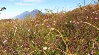 Amazing Mt. Prau Dieng