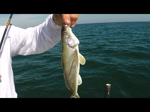 Whiting Fishing Out Of Mayport Florida