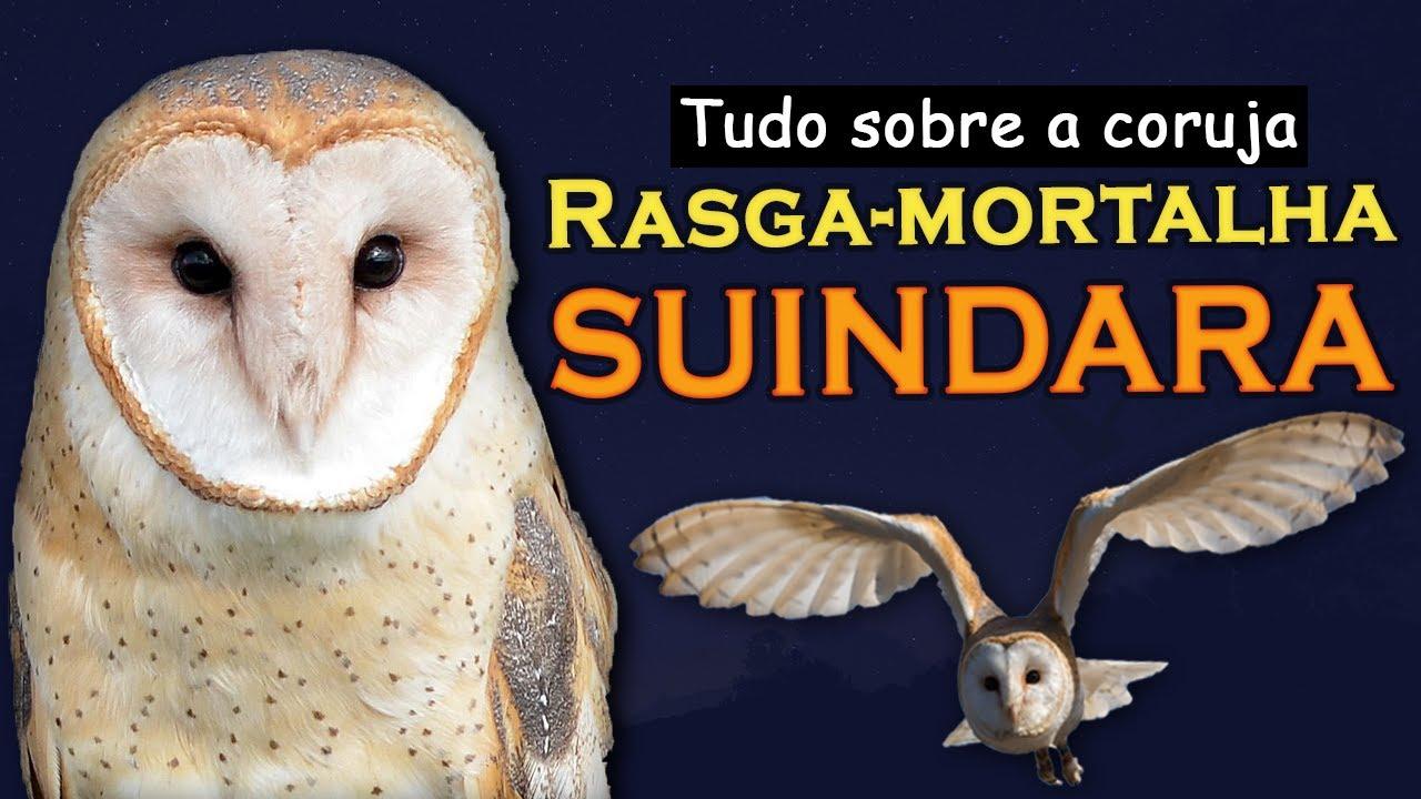Download SUINDARA, Rasga-mortalha - Segredos da coruja mais urbana do Brasil