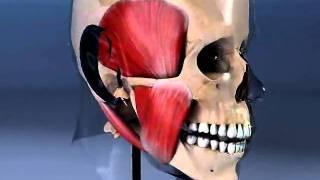 нейро-мышечная стоматология(, 2011-04-07T07:51:47.000Z)