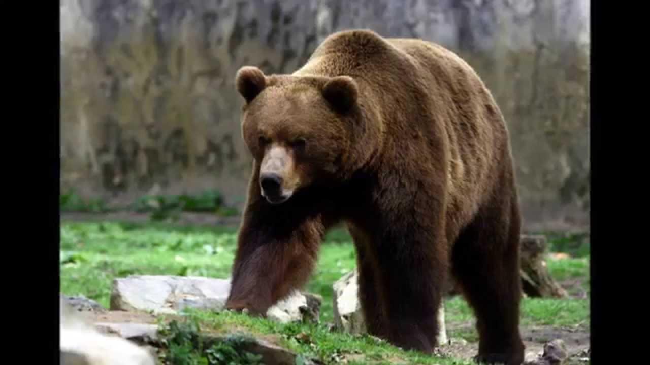 bjørnen vågner