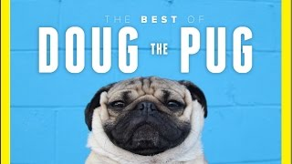 The Best Moment Of Doug The Pug