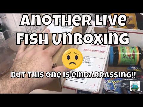 Live Fish Unboxing Part Deux! Aquarium Fish Foom VLOG