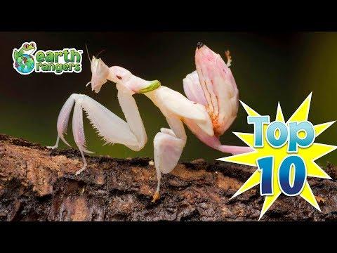 Top Ten Animals in Disguise