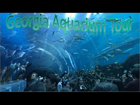 Georgia Aquarium Tour | Best In The Nation!