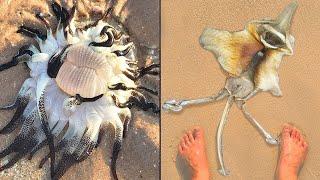10 ЗАГАДОЧНЫХ морских существ, которых ВЫБРОСИЛО НА БЕРЕГ