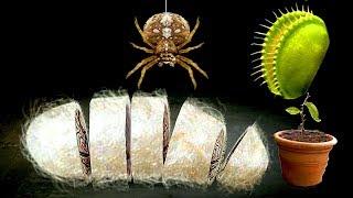 【小熙解说】种子搞怪器 模拟一颗捕蝇草被蜘蛛缠成茧还变成牛排