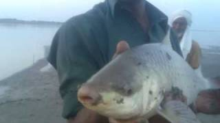 fishing in pakistan by shaheen anglers