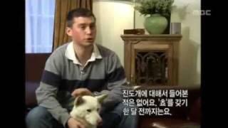 Jindo Dog, Part 5 Of 6