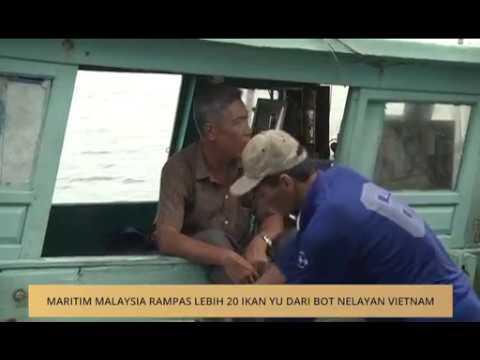 Maritim Malaysia rampas lebih 20 ikan yu dari bot nelayan Vietnam