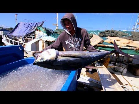 Saving the Pacific's Tuna