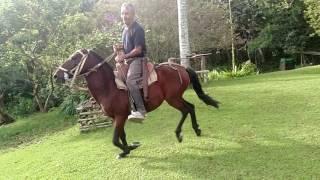 Download Video Abulo Carlos cabalgando MP3 3GP MP4