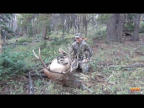Colorado Archery Elk Hunt - Call 'em To Your Toes! 5x6 Heart-Shot