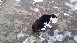 Кота мучиют