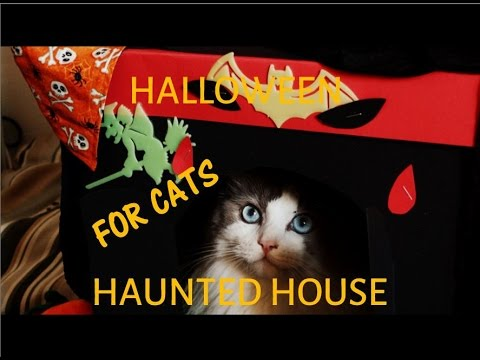 Halloween Haunted House for Cats - DIY Projects