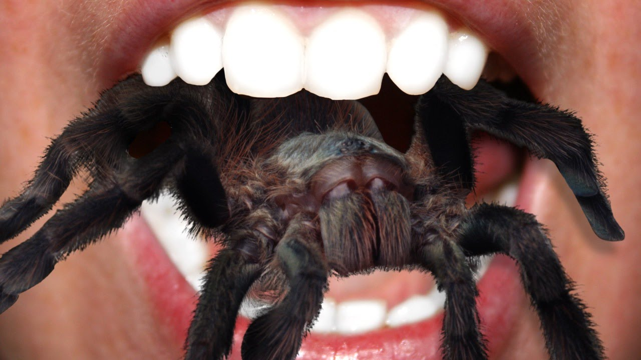 Image result for person eating a tarantula