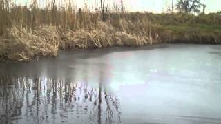 Vlog:Własny Staw co zrobić aby ryby pr...