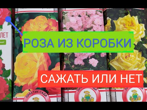#Роза из коробки.