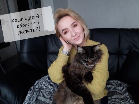Вопрос: Почему кошка дерет обои, если когтеточка не помогает?