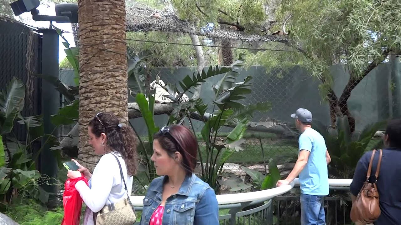 Mirage Las Vegas Siegfried Roy 39 S Secret Garden And Dolphin Habitat Miquelli S Amerikablog