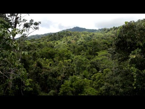 Travel Video Guide | World's Oldest Rainforest