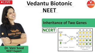 Inheritance of Two Genes Class 12   Principles of Inheritance and Variation   NCERT   VBiotonic