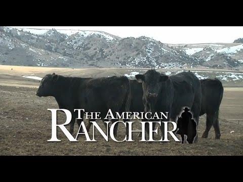 Felton Angus - American Rancher 2015