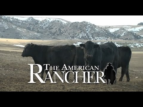 Where the Best Beef In America Comes From