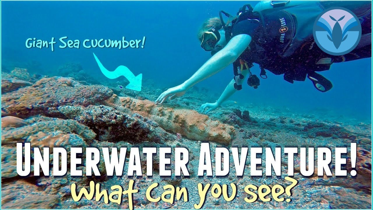 Underwater Adventure! What can YOU See? | Maddie Moate