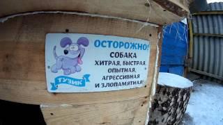 Самая злая собака в Саранске))