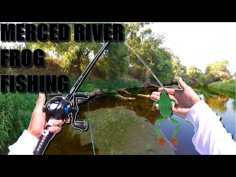 MERCED RIVER FROG FISHING FOR GIANT SPOTTED BASS – !GIANT SPOT1!