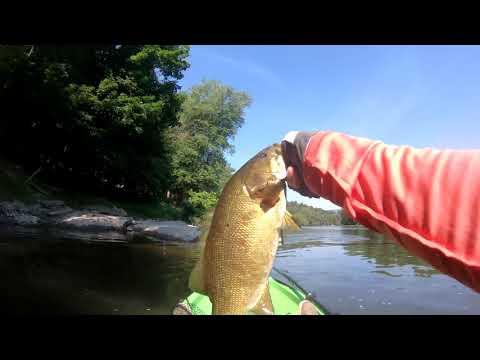 Susquehanna River Smallmouth Fishing (SUPRISE CATCH)