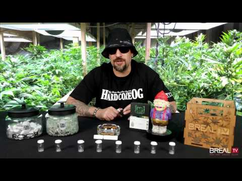 Strain Review W/ Dr. Greenthumb - King Henry OG | BREAL.TV