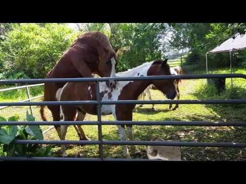 Hawaii Horses double date