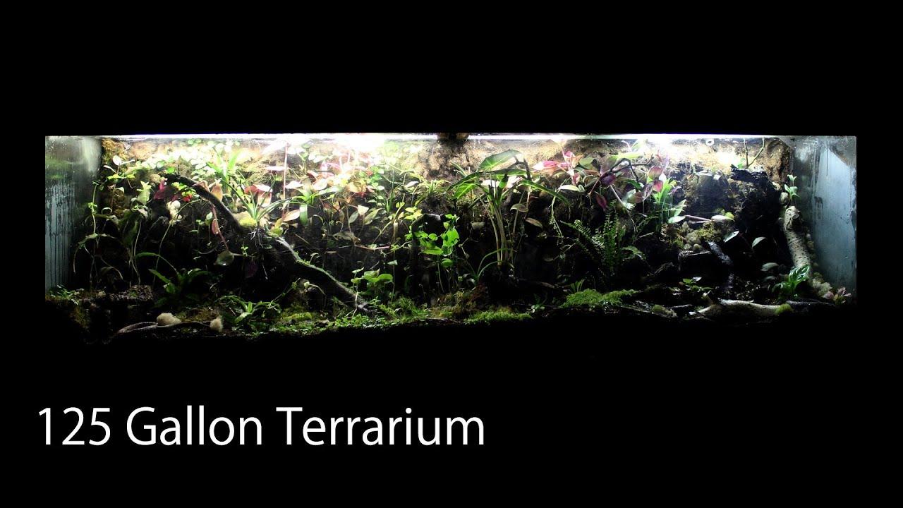 125 Gallon Terrarium Vivarium - Anoles Fire-bellied Toads & House Gecko